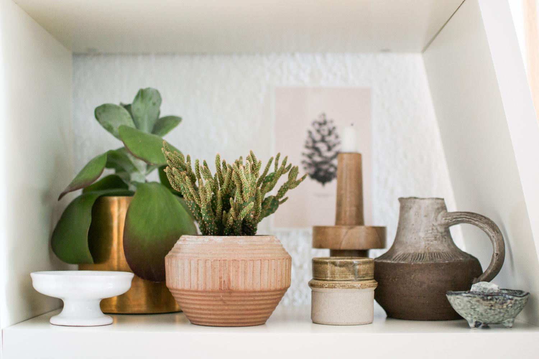 Piante Grasse In Appartamento Tutto Quello Che Serve Sapere Livingcorriere