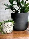 4. etsy.com-piante-grasse