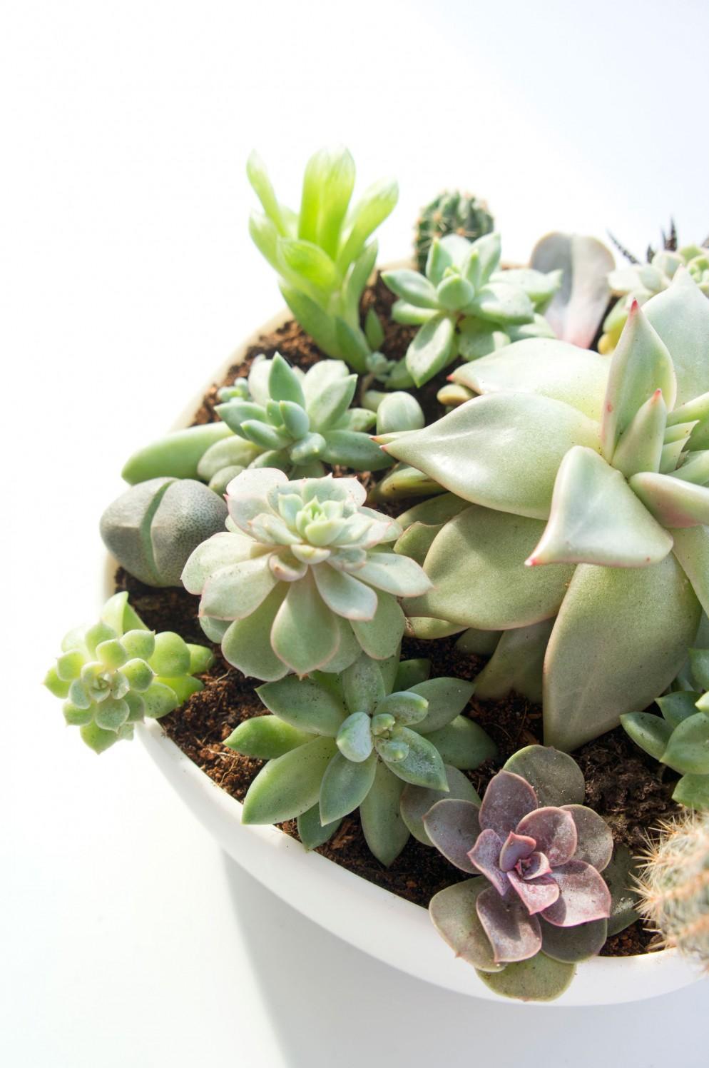 5.-JOELIX-succulents-piante-grasse