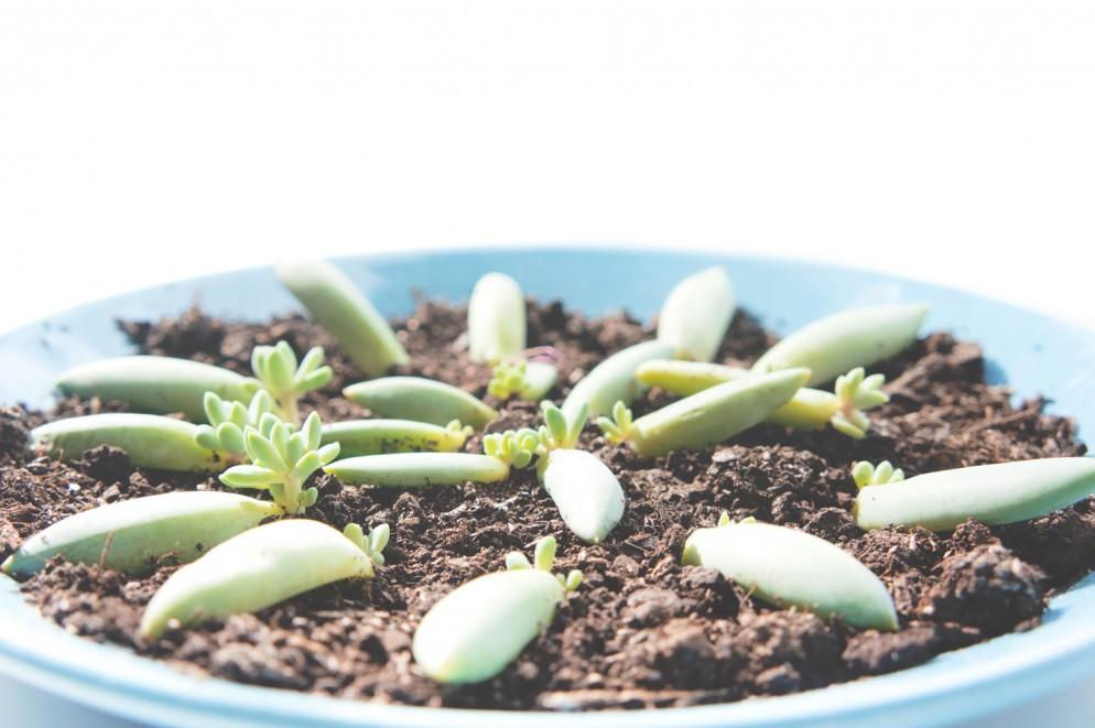 8.JOELIX-succulents-6-piante-grasse