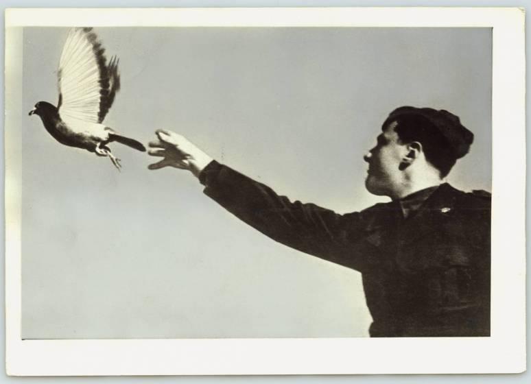 lancio_di_un_colombo_viaggiatore_1946