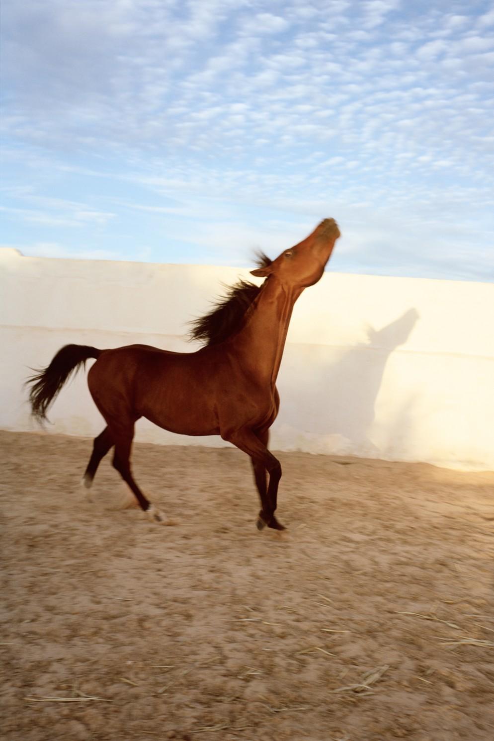 07_JH_HORSE_2007-2014.300
