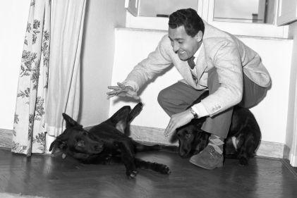 Alberto Sordi posato in casa con i suoi cani. 26.11.1955