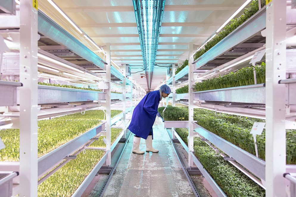 Urban Farming Goes Underground