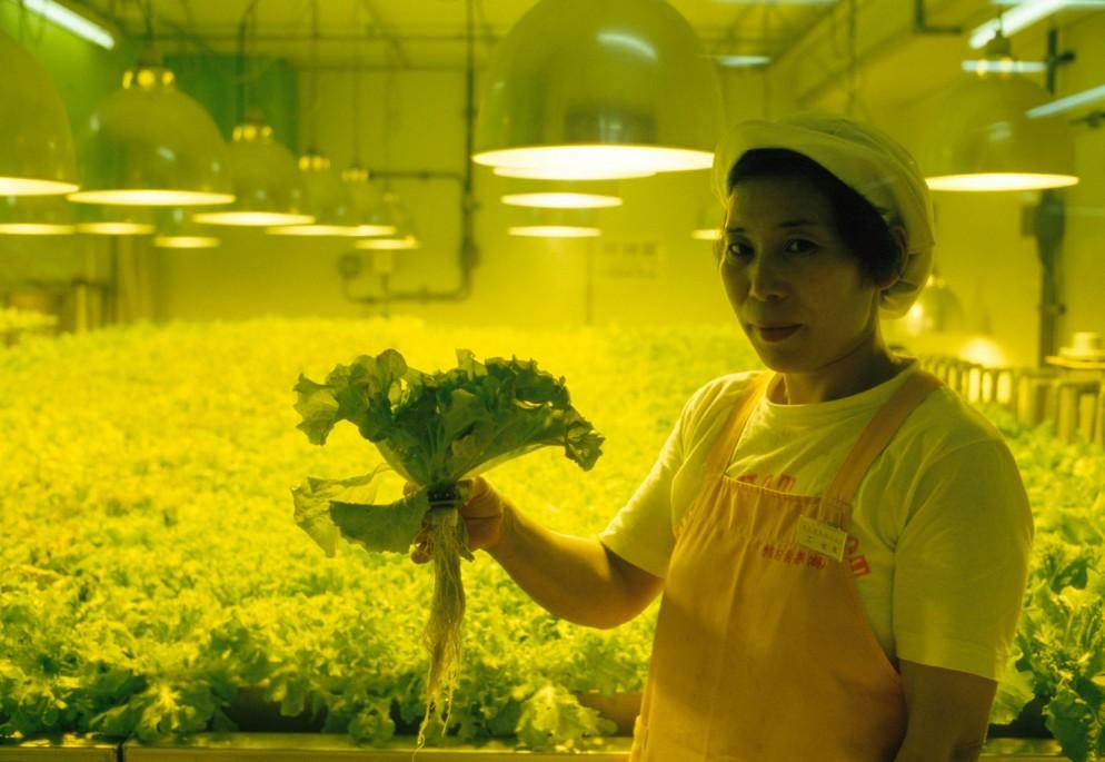 lettuce-farm-tokyo-GettyImages-543860590
