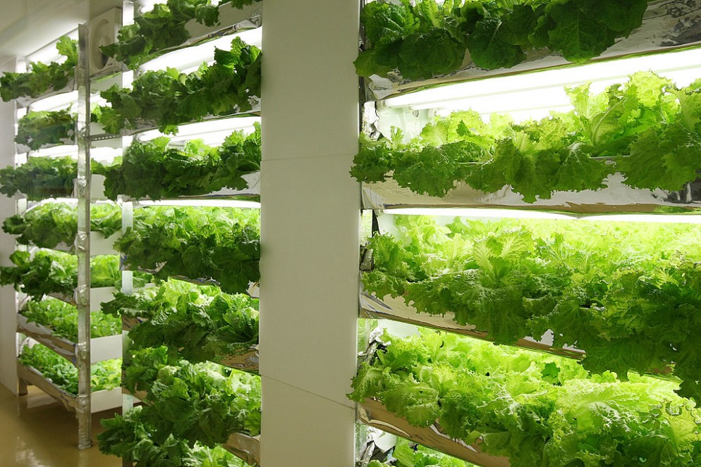Plant Factories Propose A New Style Of Agriculture