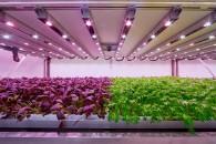 planet-farm-cavenago-livingcorriere-01
