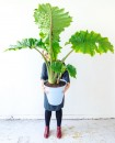 joelix-elephant-ear-plant