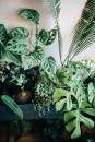 plant-tribe-libro-3