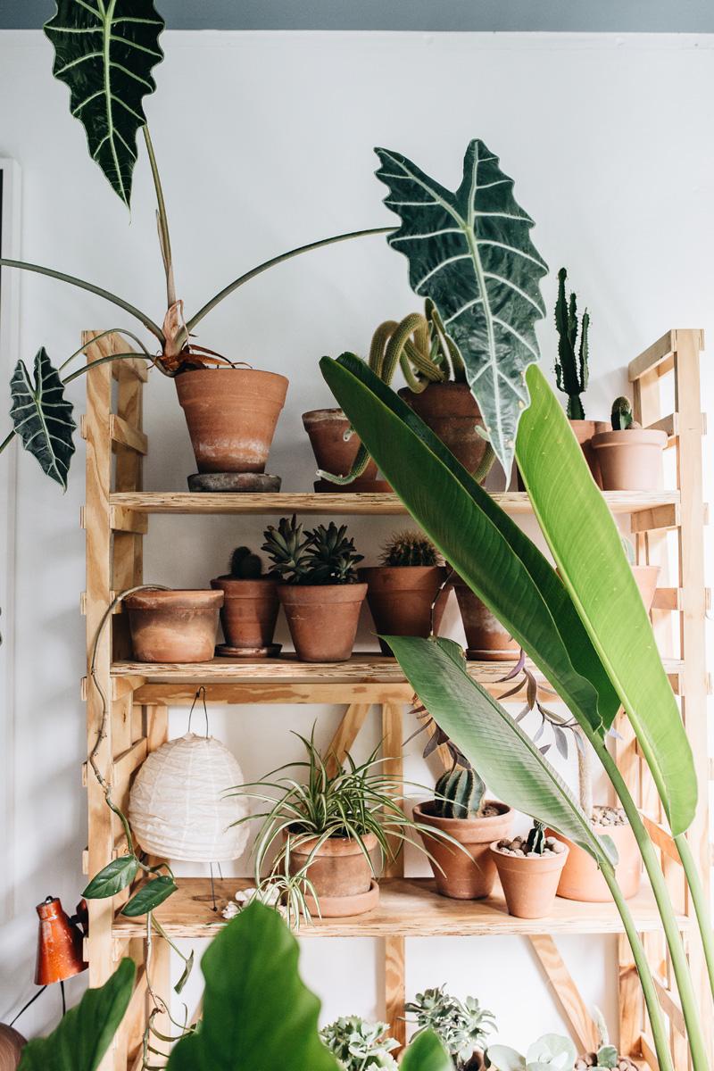 plant-tribe-libro-7. Plant-Tribe-Mauricio-Arruda-Sao-Paulo-Brazil