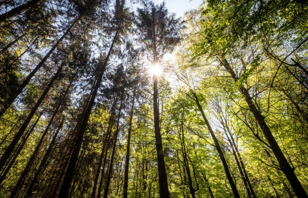 Forest fire risk in Baden-Württemberg