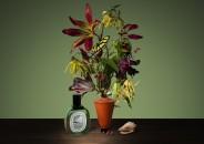 diptyque Impossible Bouquet 4
