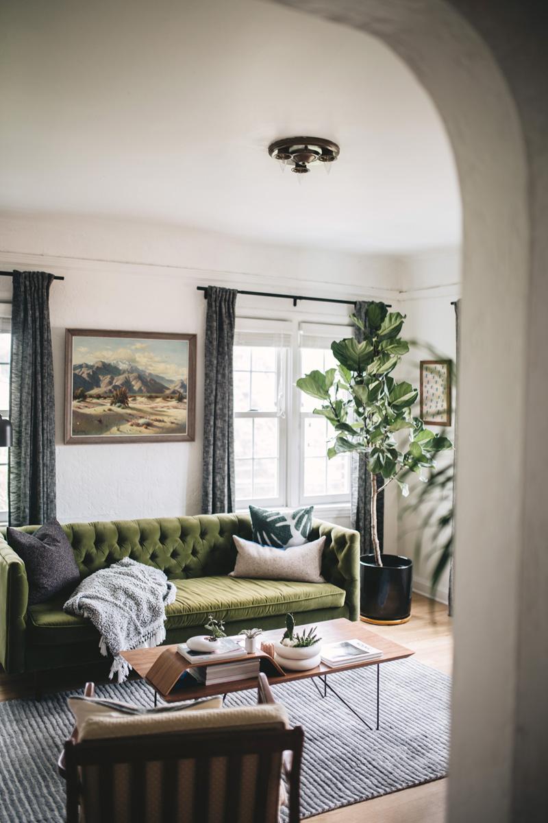 Piante Da Arredo Appartamento piante da appartamento giganti: le più belle per arredare