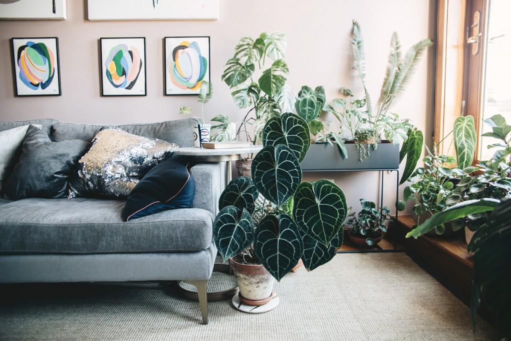 piante-appartamento-grandi-4.PlantTribe_p196c