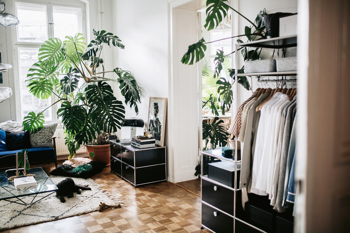 Piante Da Arredo Appartamento arredare con piante da appartamento di grandi dimensioni