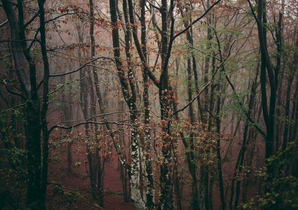 ©Francesca-Todde,-Woodland,-2016