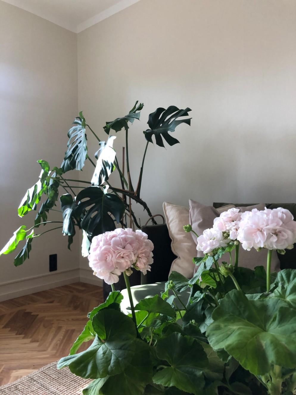 Pianta Da Interno Con Fiore Bianco  jakarta 2021