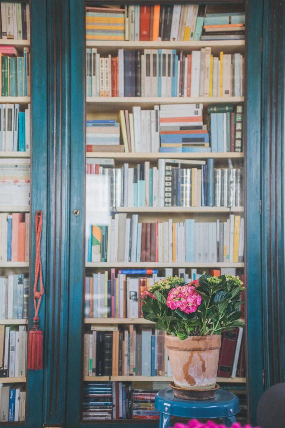 Piante da interno con fiori   Foto 1   LivingCorriere