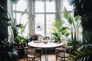 Il potere delle piante