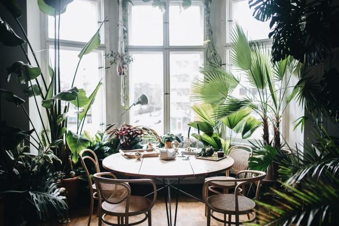 Foto Jules Villbrandt per Urban Jungle Bloggers
