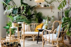 10 piante per un interno con poca luce