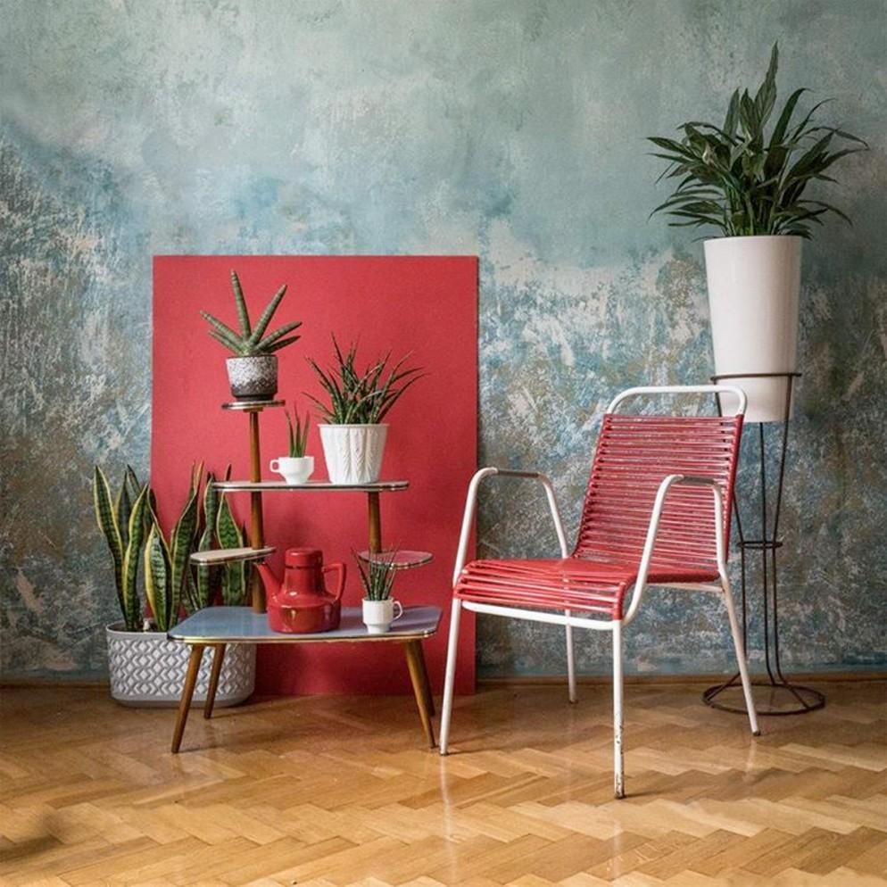 piante-da-interno-poca-luce-2. @vintage_na_lubinowej-living-corriere