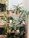 piante-da-interno-poca-luce-4. pothos @intotheplants-living-corriere