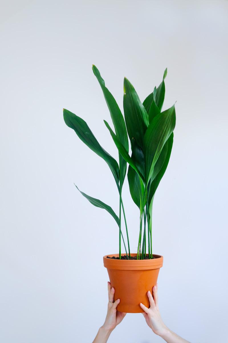 piante-da-interno-poca-luce-5. @profil.kwitnacy -living-corriere