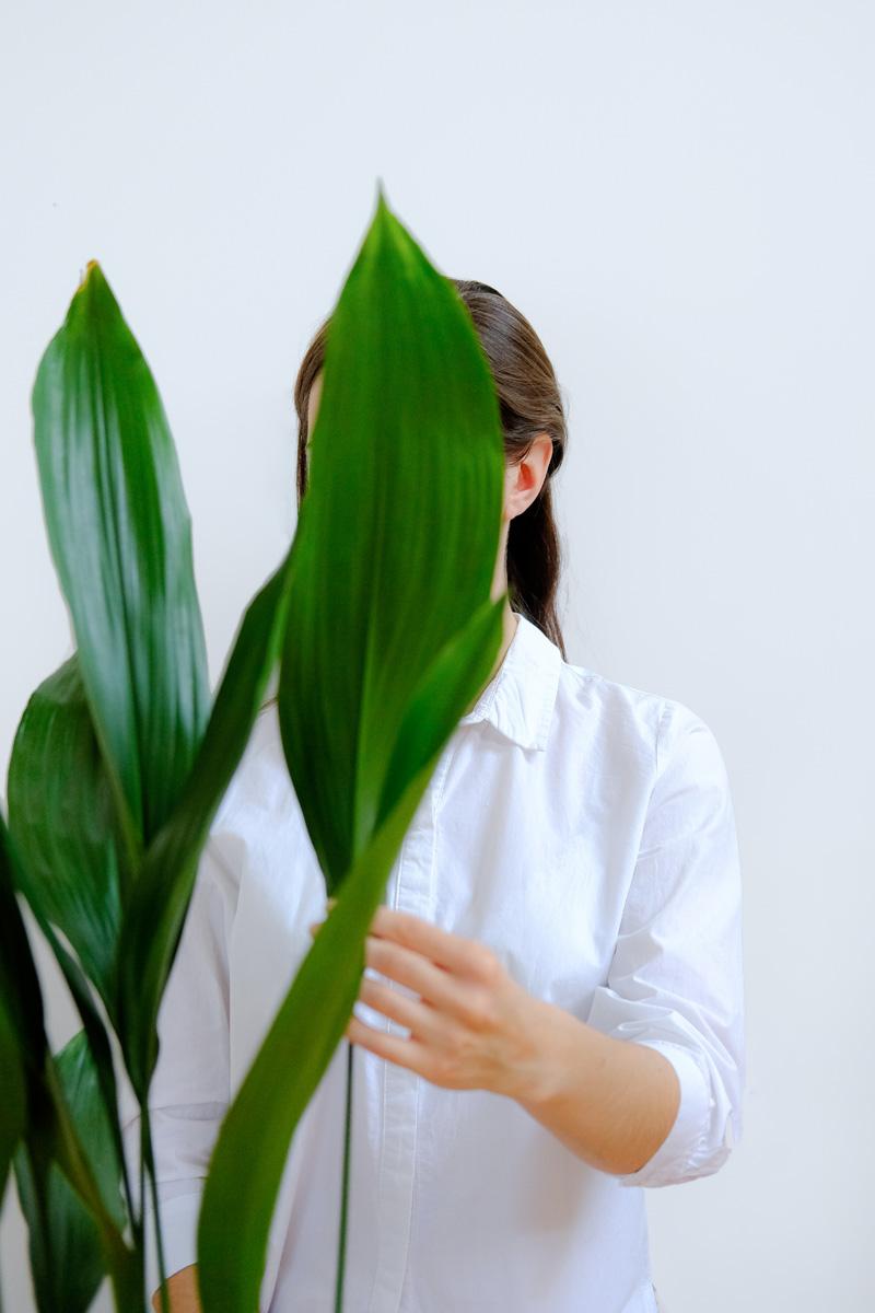 piante-da-interno-poca-luce-5. @profil.kwitnacy-living-corriere