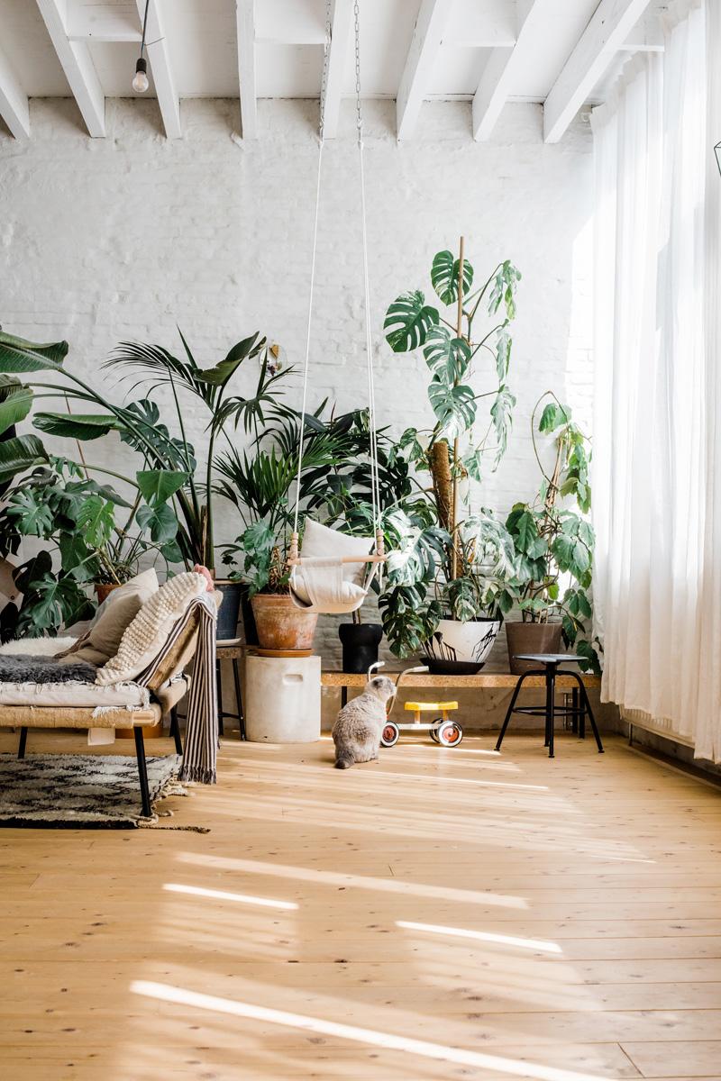 10 piante da interno verdi e belle con poca luce - Foto ...