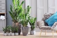 piante-da-interno-poca-luce-Zamioculcas7