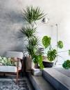 piante-interno-poca-luce-dracaena-living-corriere