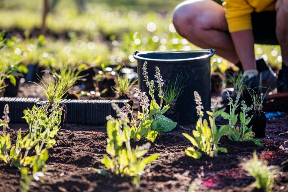 vitra-piet-oudolf-garden-living-corriere-3