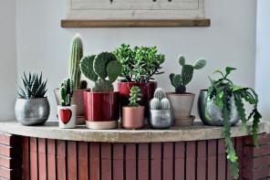8 piante grasse da appartamento belle e facili da curare