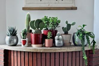 piante-grasse-da-appartamento-1.@lecactusclub boutique-store-paris11