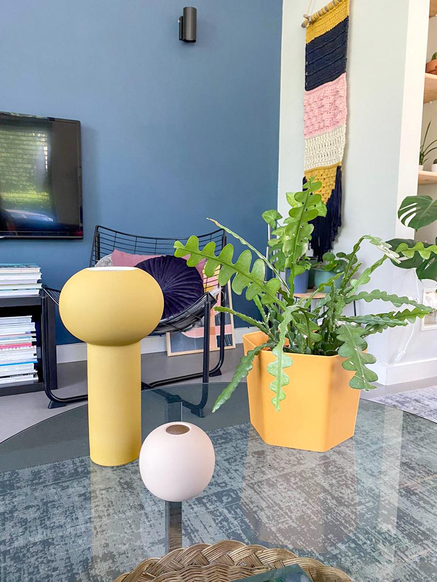 piante-grasse-da-appartamento-5. colour_pop_up