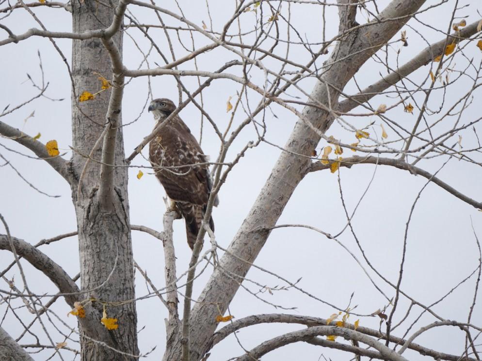 016_freshkills-park-wildlife_38534563802_o