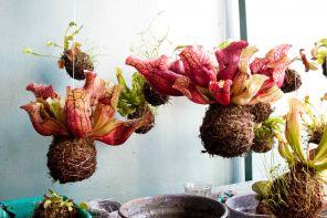 Il fascino esotico delle piante carnivore da appartamento