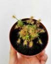 Foto @carnivorousplant_club e Carniflora