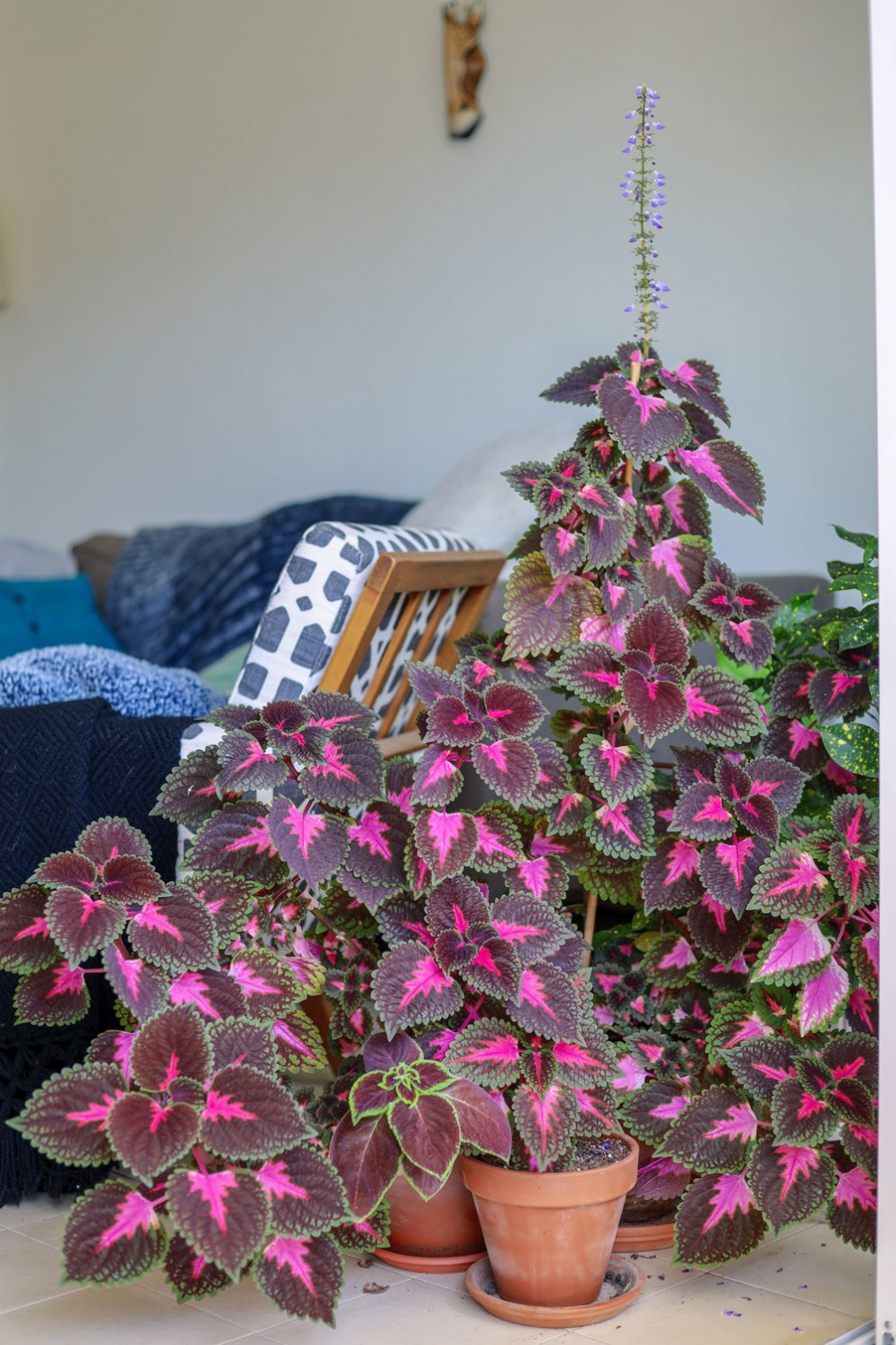 piante-da-appartamento-colorate-fittonia-mor-shani-unsplash-livingcorriere