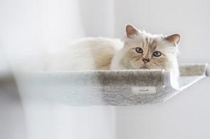 La gatta di Lagerfeld firma un arredo per felini