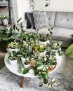 decorazione tavolino salotto piante