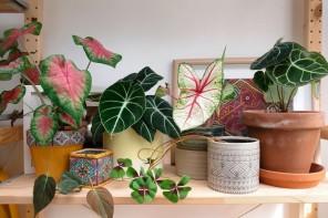 Piante da appartamento rare: i segreti del verde insolito