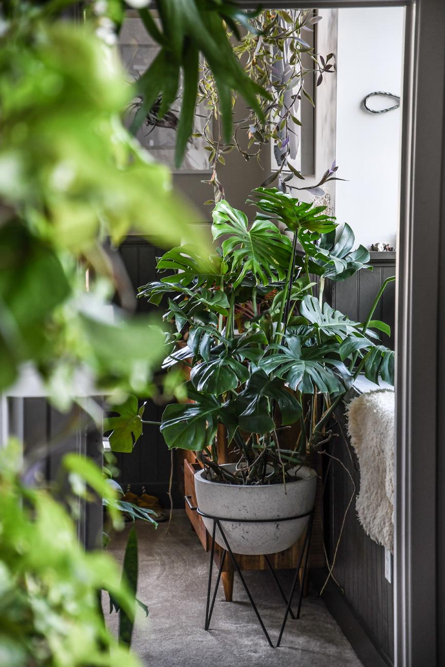 arredare-con-le-piante-angolo-livingcorriere