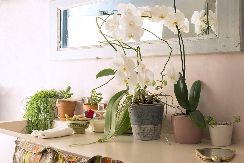 arredare-piante-orchidea-livingcorriere