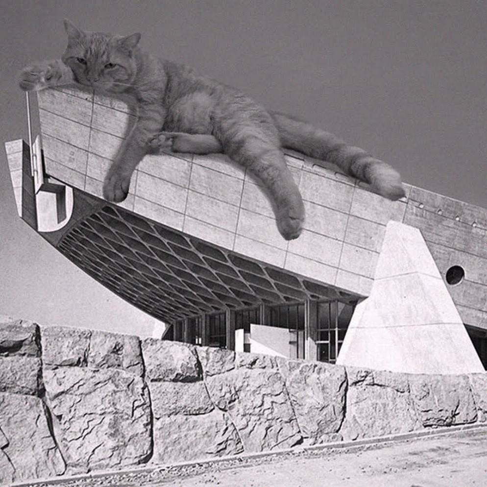 02 Cats_of_Brutalism