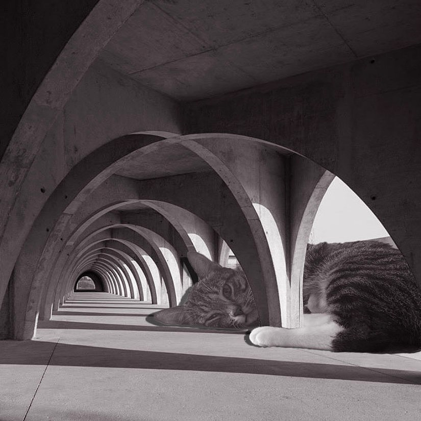 06 Cats_of_Brutalism