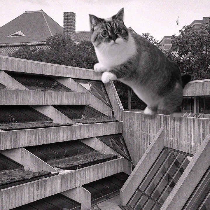 07 Cats_of_Brutalism