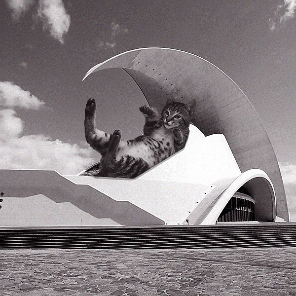 08 Cats_of_Brutalism