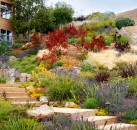 Courtesy Arterra Landscape Architects